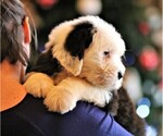 Small Photo #14  Breeder Profile in STANLEY, VA, USA