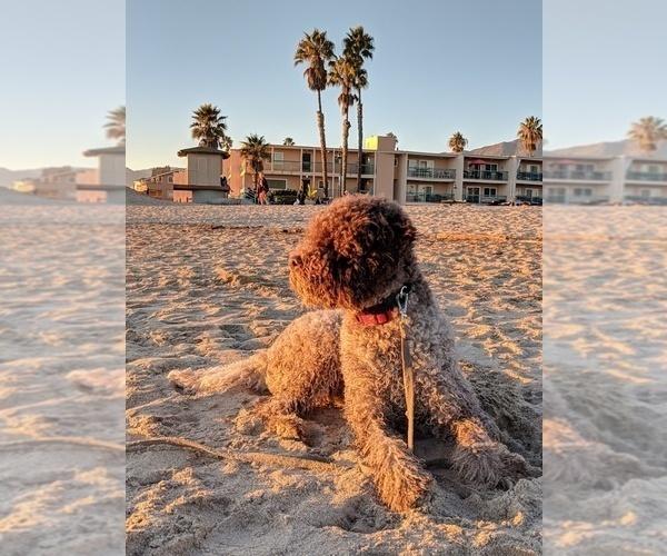 Medium Photo #30  Breeder Profile in AGUA DULCE, CA, USA