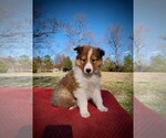 Small Photo #1  Breeder Profile in CENTERTOWN, TN, USA