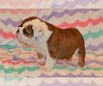 Small #71 Breeder Profile image