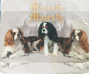 Main photo of Cavalier King Charles Spaniel Dog Breeder near WEST POINT, VA, USA