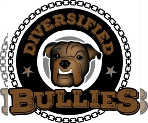 Bulldog Dog Breeder in LEXINGTON,  USA