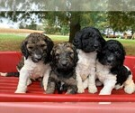 Small Photo #3  Breeder Profile in CLARE, IL, USA