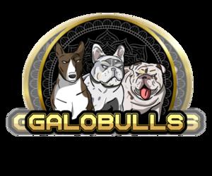 French Bulldog Dog Breeder in FORT LAUDERDALE,  USA