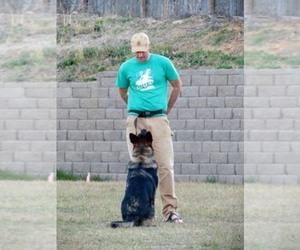 Main photo of German Shepherd Dog Dog Breeder near MAUMELLE, AR, USA
