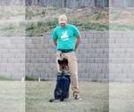 German Shepherd Dog Breeder in MAUMELLE, AR, USA