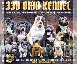 French Bulldog Dog Breeder near MINERAL RIDGE, OH, USA