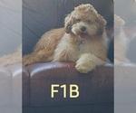 Small #63 Breeder Profile image