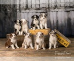 Small Photo #4  Breeder Profile in ROBERTS, IL, USA