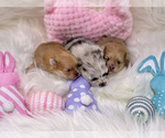 Small Photo #3  Breeder Profile in STKN, CA, USA
