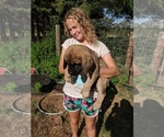 Mastiff Breeder in ANTHONY, KS, USA