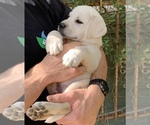 Small Photo #16  Breeder Profile in GLENDALE, CA, USA
