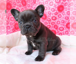 Small Photo #6  Breeder Profile in BELLE CENTER, MO, USA