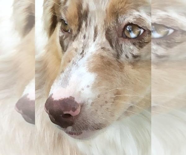 Medium Photo #4  Breeder Profile in ODIN, IL, USA