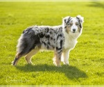 Small Photo #5  Breeder Profile in ROBERTS, IL, USA