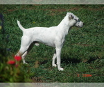 Small Photo #6  Breeder Profile in FLAGSTAFF, AZ, USA