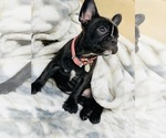 Small Photo #10  Breeder Profile in LOS ANGELES, CA, USA