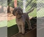 Small Photo #22  Breeder Profile in AGUA DULCE, CA, USA