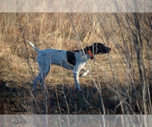 Main photo of German Shorthaired Pointer Dog Breeder near PERRY, KS, USA