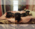 Rottweiler Breeder in CHARDON, OH, USA