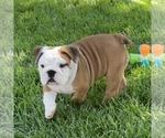 Small #144 Breeder Profile image