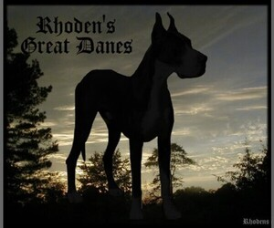 Great Dane Breeder in SHERIDAN, AR