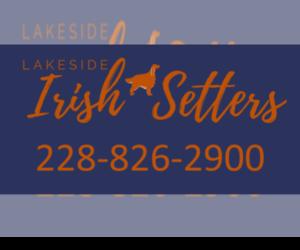 Irish Setter Dog Breeder near MATTHEWS, NC, USA