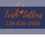 Irish Setter Breeder in MATTHEWS, NC, USA
