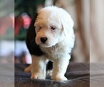 Small Photo #12  Breeder Profile in STANLEY, VA, USA