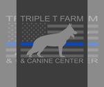 Belgian Malinois Breeder in VALPARAISO, IN, USA