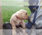 Small #19 Breeder Profile image