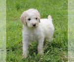 Small #72 Breeder Profile image
