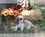 Small #87 Breeder Profile image