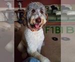 Small #65 Breeder Profile image