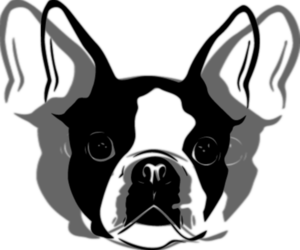 Boston Terrier Dog Breeder in WINTON,  USA