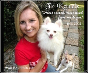 Pomeranian Dog Breeder in GRAYSON,  USA