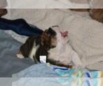 Small #13 Breeder Profile image