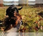 Small #1 Breeder Profile image