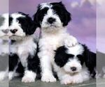 Small Photo #26  Breeder Profile in LISBON, OH, USA