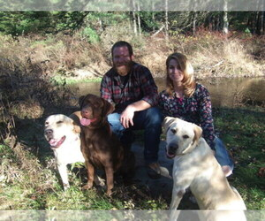 Labrador Retriever Breeder in KUNKLETOWN, PA