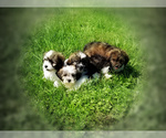 Small Photo #2  Breeder Profile in LISBON, OH, USA