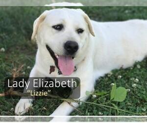 Labradoodle-Labrador Retriever Mix Dog Breeder in JASPER,  USA