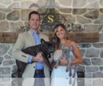 French Bulldog Breeder in LITITZ, PA, USA