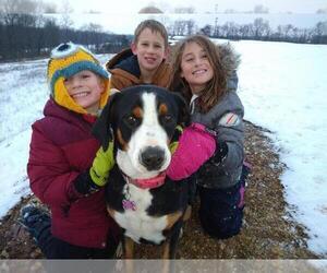 Greater Swiss Mountain Dog Dog Breeder near JONESTOWN, PA, USA