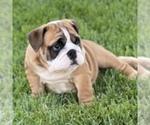 Small #145 Breeder Profile image