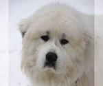 Small #57 Breeder Profile image
