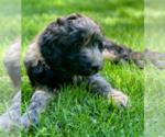 Small #85 Breeder Profile image