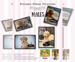 Small Photo #13  Breeder Profile in LISBON, OH, USA
