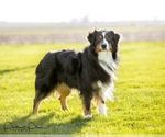 Small Photo #18  Breeder Profile in ROBERTS, IL, USA