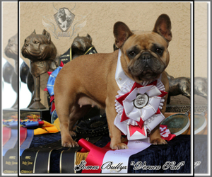 French Bulldog Dog Breeder in OJAI,  USA